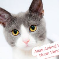 Atlas Animal Hospital - North Vancouver logo