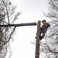 Fall-It Tree Services logo
