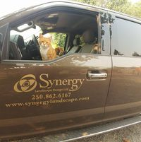 Synergy Landscape Design Ltd logo