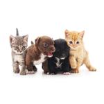 Gibsons Veterinary Hospital logo